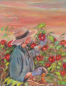 Picking fresh tomatoes