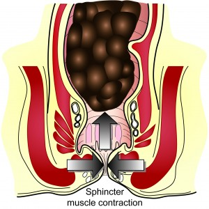 external sphincter muscle squeezing